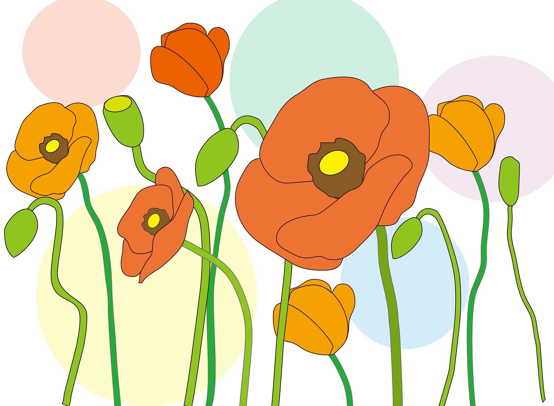 poppy-1251557_1920
