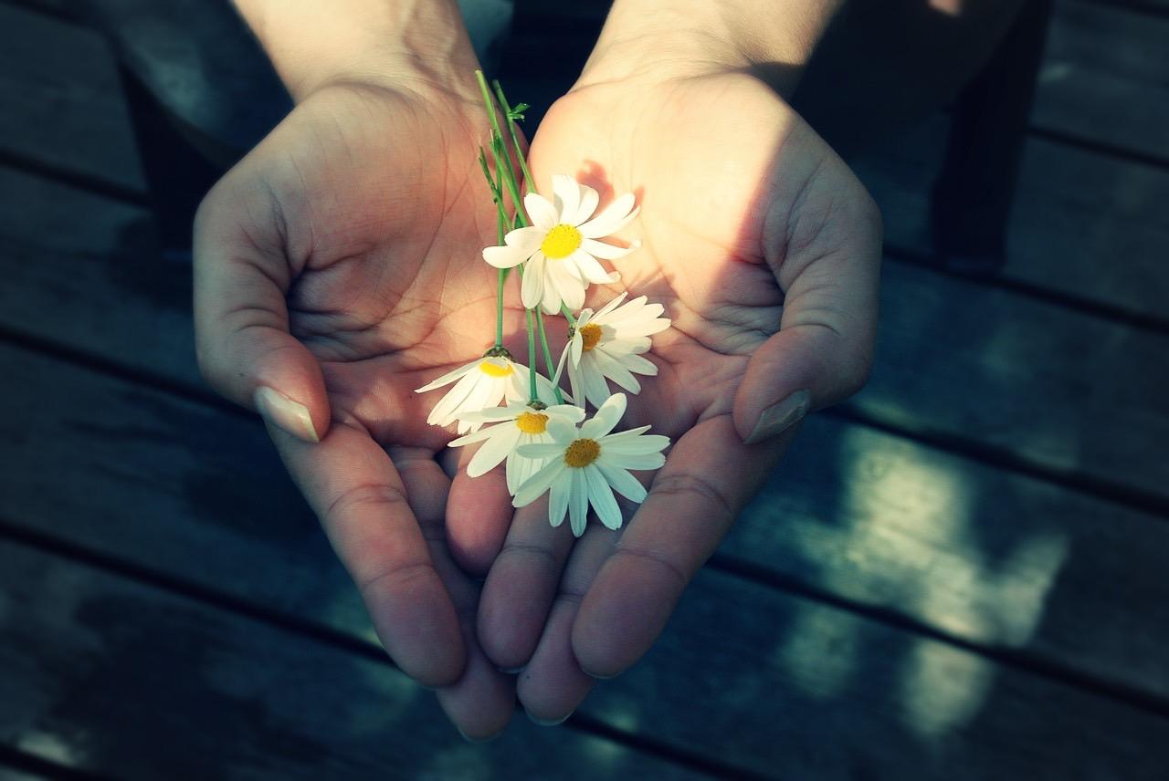 flower-22656_1280