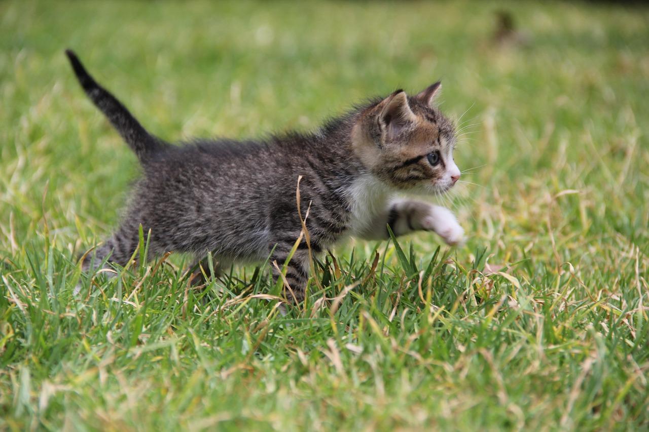 kitten-487641_1280