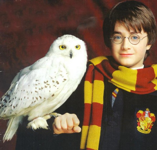 PromoHP1_Harry_Potter_Hedwige2-600x574