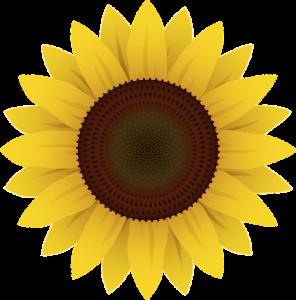 flowers-1169667_960_720